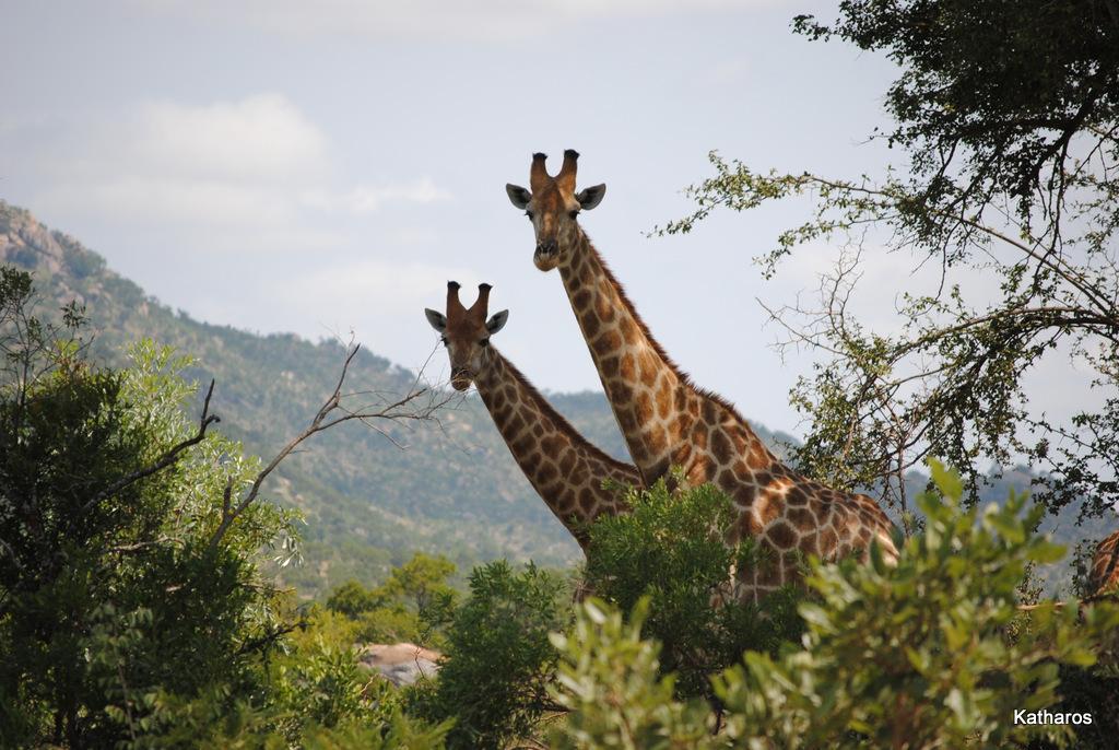 Samen werken (12 02 2010 Krugerpark)
